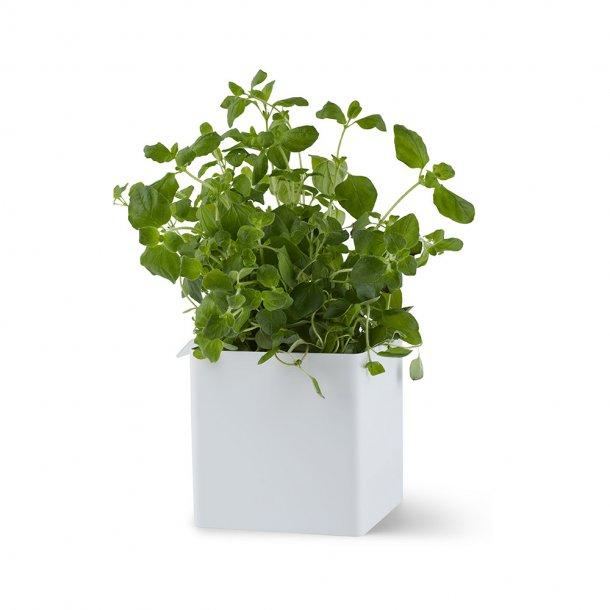 Gejst - Flex Small Box - Boks