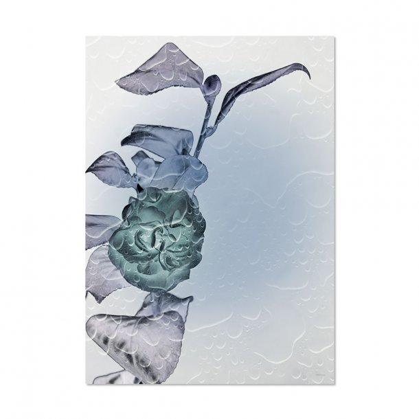 Chicura - Inrosevert - Plakat