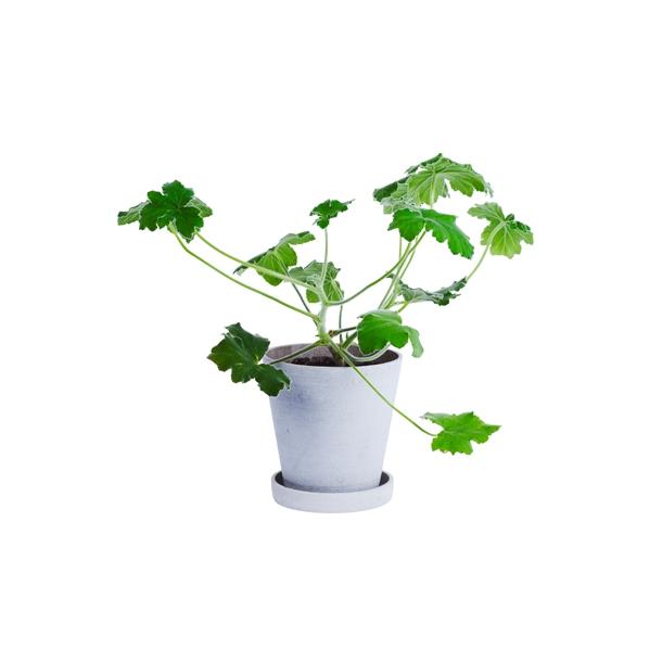 HAY - Flowerpot, saucer – Grau – Blumentopf mit Unterteller